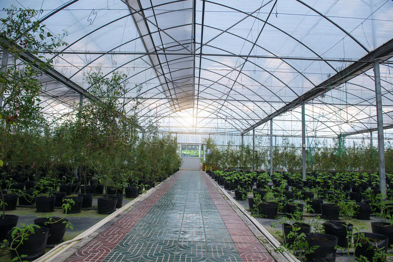 Download Serra Sull'azienda Agricola Fotografia Stock - Immagine di ecologia, esterno: 55360330