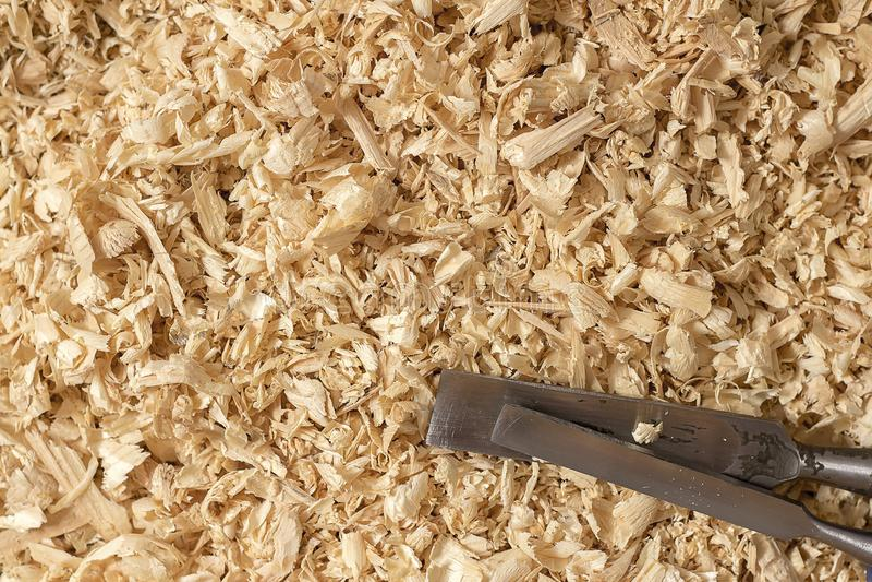 Serragem do zumbido para o hamster fotografia de stock