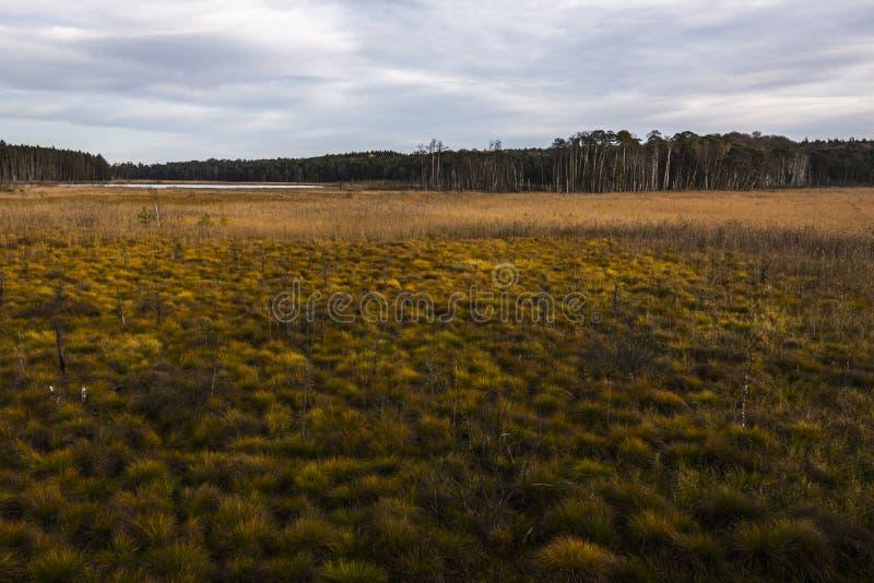 Serrahn, paesaggio conservato fotografie stock libere da diritti