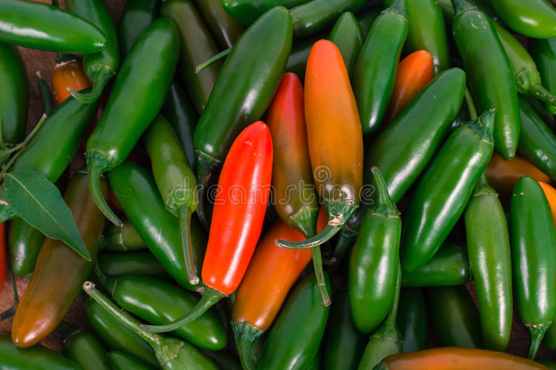Serrano jalapeno pepper. Serrano and jalapeno pepper crop background royalty free stock images