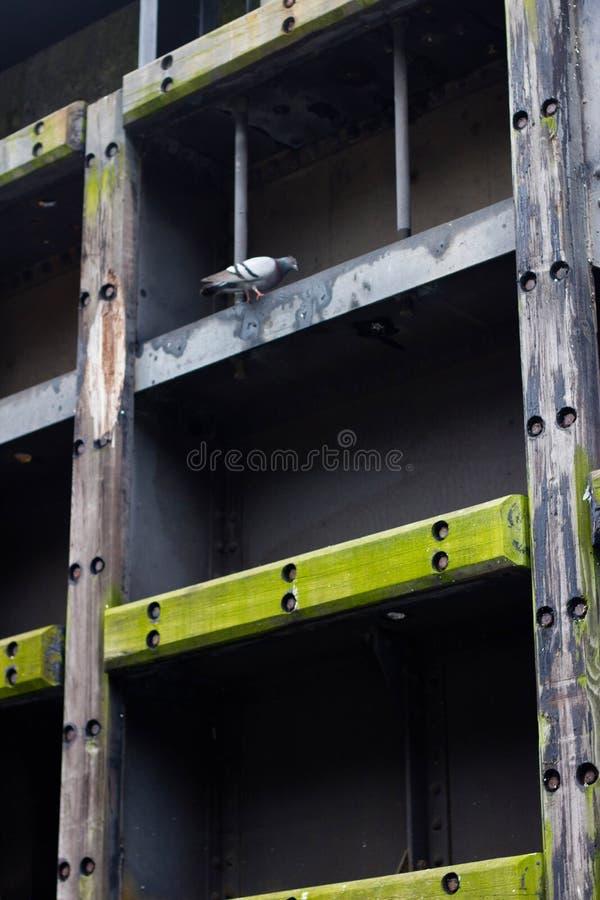 Serrature di Ballard, Seattle WA immagine stock libera da diritti