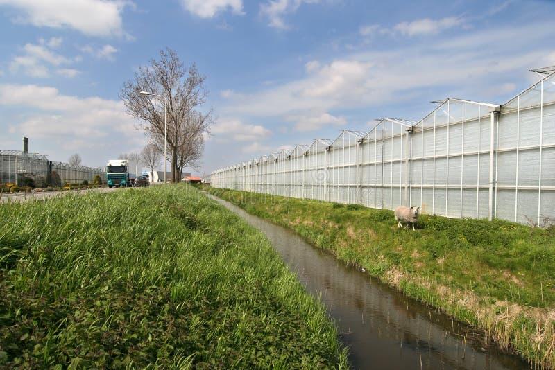 Serre agricole immagine stock