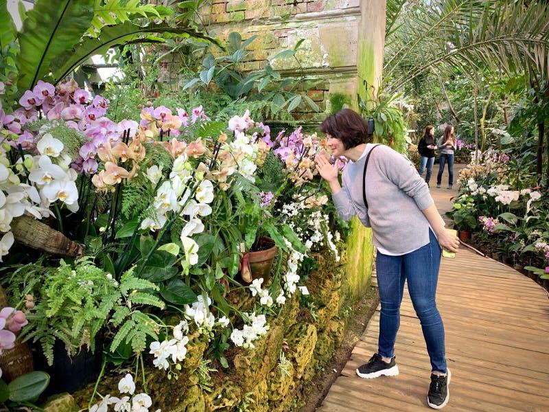 Serre chaude avec des plantes tropicales avec des fleurs photographie stock libre de droits