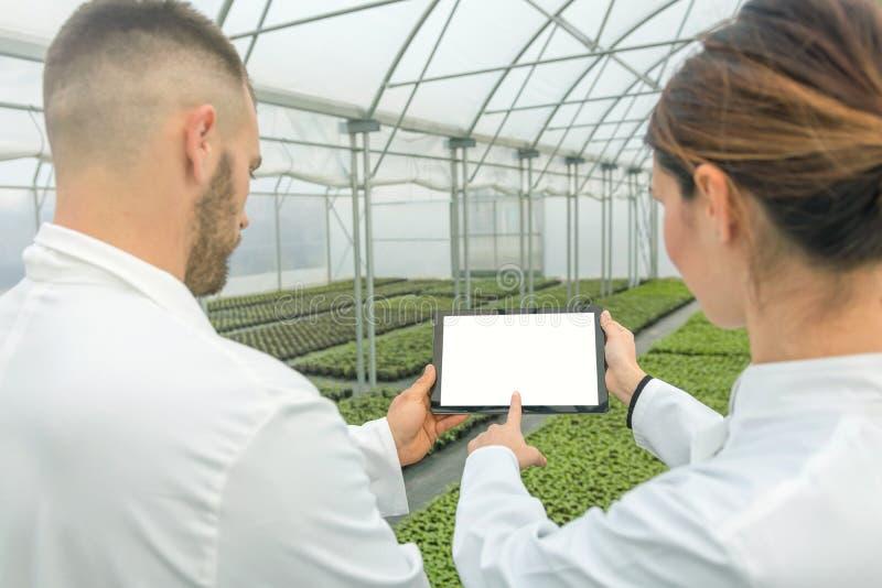 Serre chaude blanche de Tablette d'écran Ingénieurs agricoles employant l'étiquette photo libre de droits