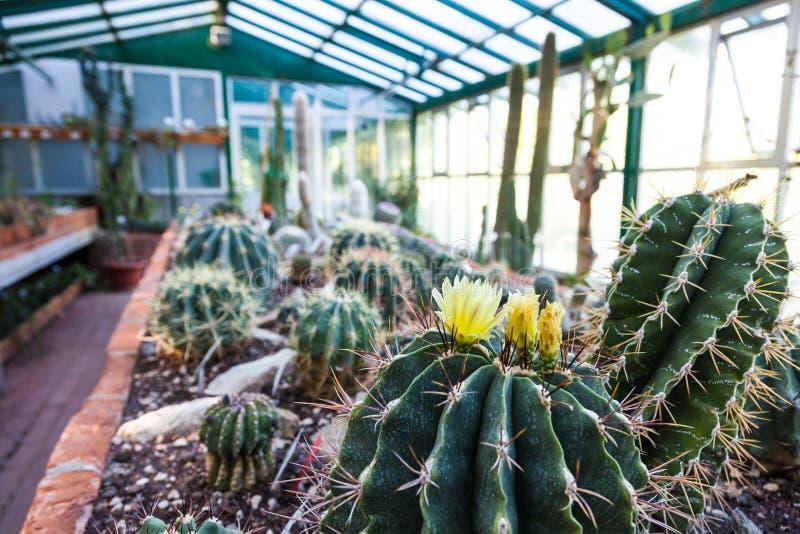 Serre chaude de cactus images stock