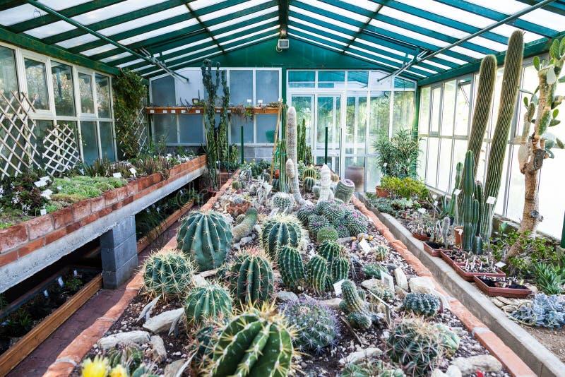 Serre chaude de cactus photos stock