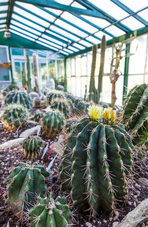 Serre chaude de cactus image libre de droits