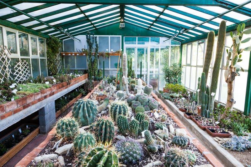 Serre chaude de cactus image stock