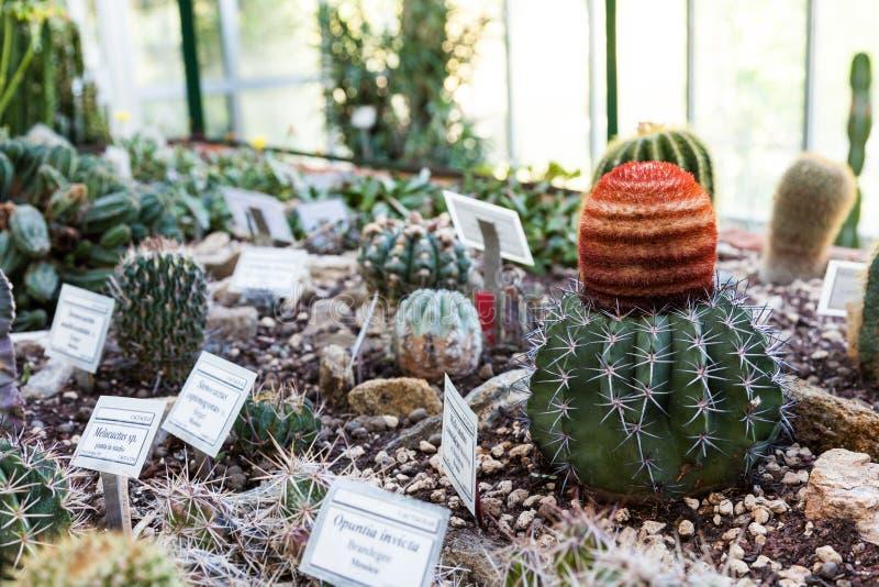 Serre chaude de cactus photos libres de droits