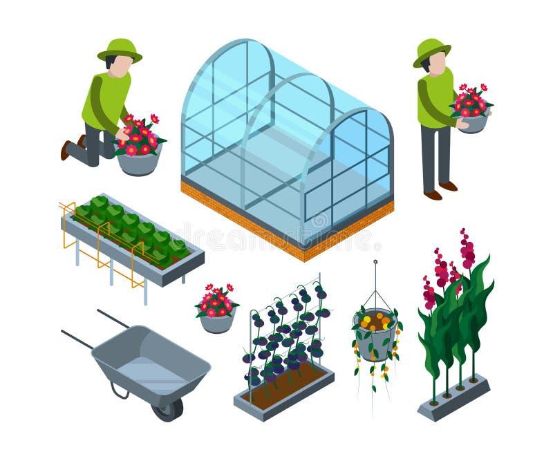 Serre chaude de ferme isométrique Les serres agricoles de brouette pour le concept d'horticulture de tomate dirigent les photos 3 illustration stock