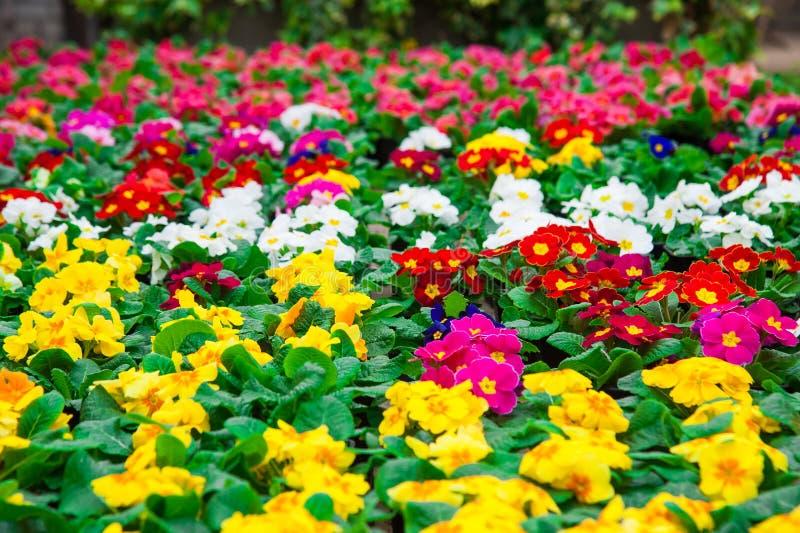 Serre chaude de jardin agrobusiness photographie stock libre de droits