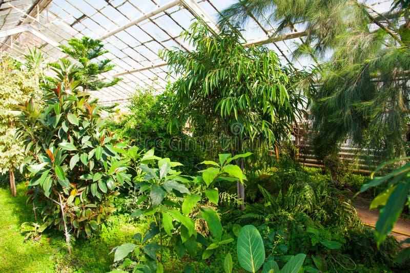 Serre chaude de jardin agrobusiness photographie stock