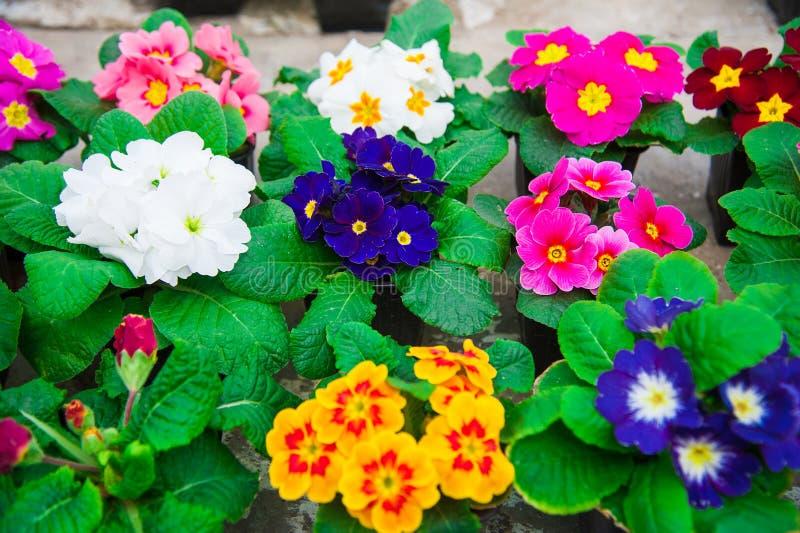 Serre chaude de jardin agrobusiness images stock