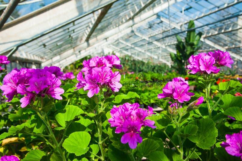 Serre chaude de jardin agrobusiness photos libres de droits