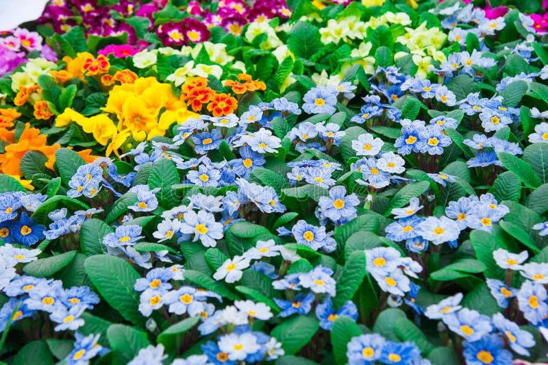 Serre chaude de jardin agrobusiness photos stock
