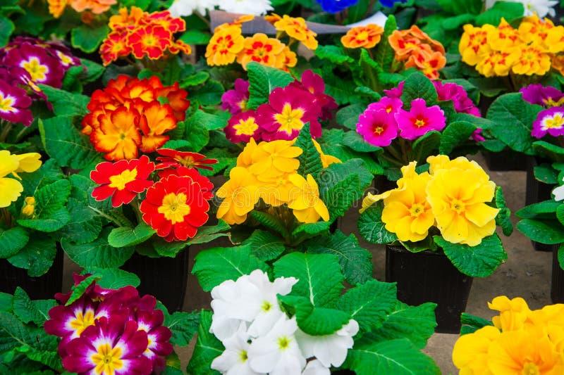 Serre chaude de jardin agrobusiness images libres de droits