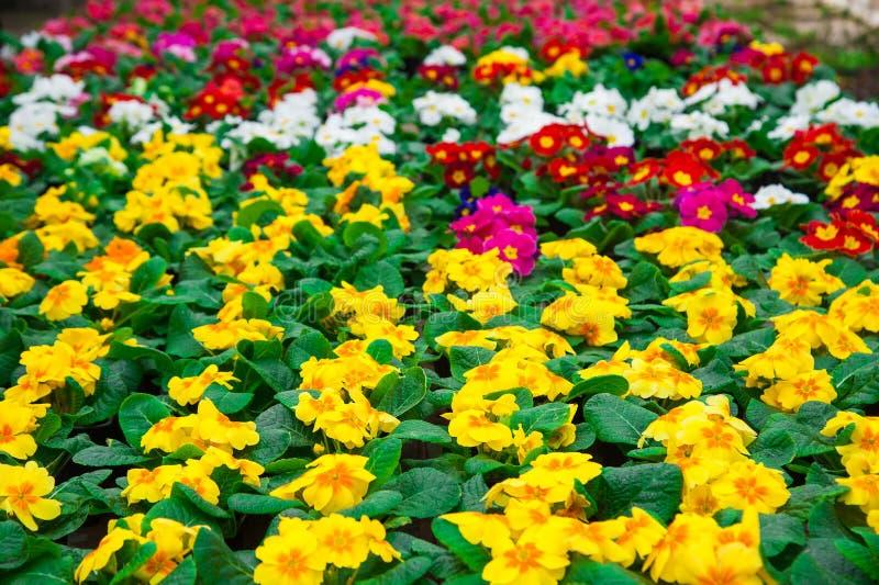 Serre chaude de jardin agrobusiness photo stock