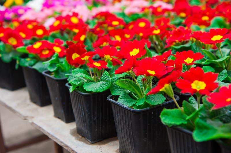 Serre chaude de jardin agrobusiness image stock