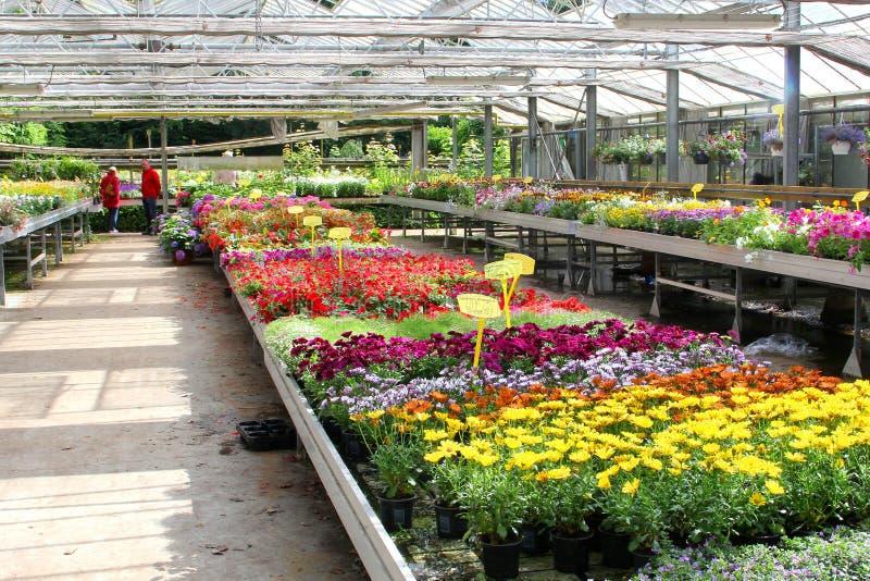 Serre chaude de jardinerie de personnes, Pays-Bas photographie stock
