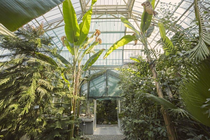 Serre chaude, jardin botanique à l'intérieur architecture, tir grand-angulaire, abondance de végétation photographie stock libre de droits