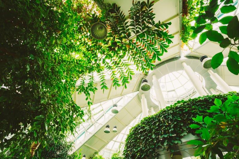 Serre met Bloemen Gematigd Huis stock fotografie