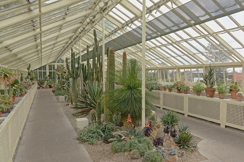 Serre met cactussen en succulents in de botanische tuinen van Dublin royalty-vrije stock afbeeldingen