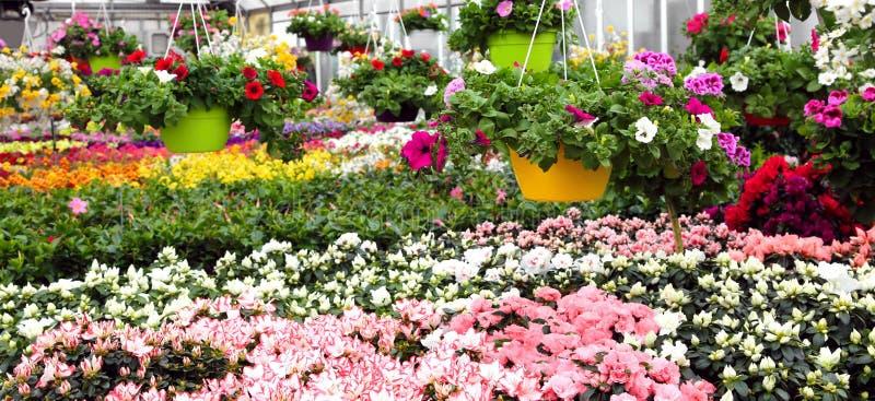 serre met mooie bloemen en installaties voor verkoop stock afbeeldingen
