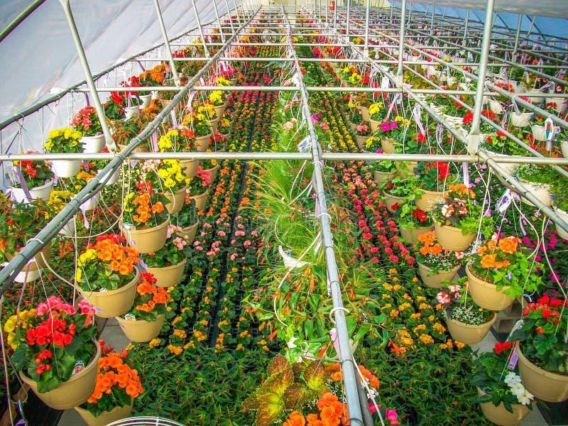 Serrehoogtepunt van kleurrijke bloemen royalty-vrije stock afbeeldingen
