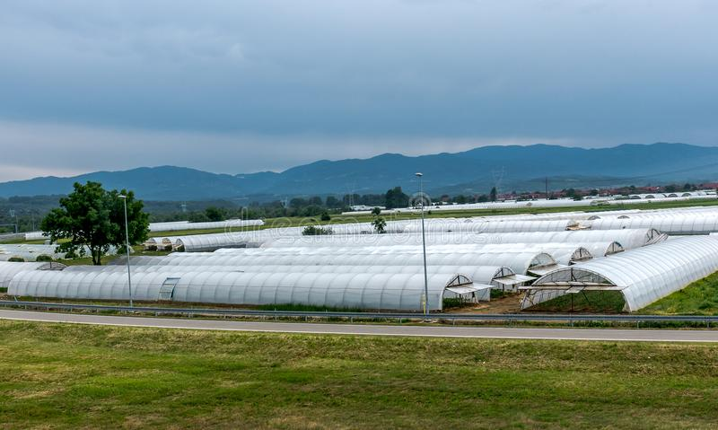 Serres chaudes, agriculture d'intérieur photographie stock libre de droits