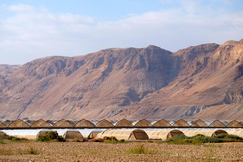Serres chaudes dans le désert de Judea photographie stock