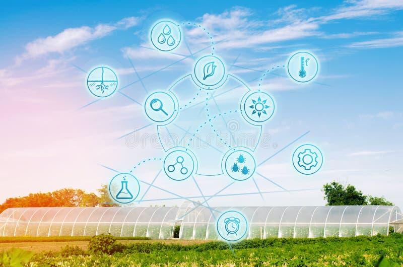 Serres chaudes dans le domaine pour des jeunes plantes des cultures, fruits, légumes, prêtant aux agriculteurs, terres cultivable photos libres de droits