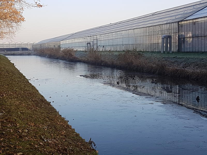 Serres chaudes Holland Westland photo libre de droits