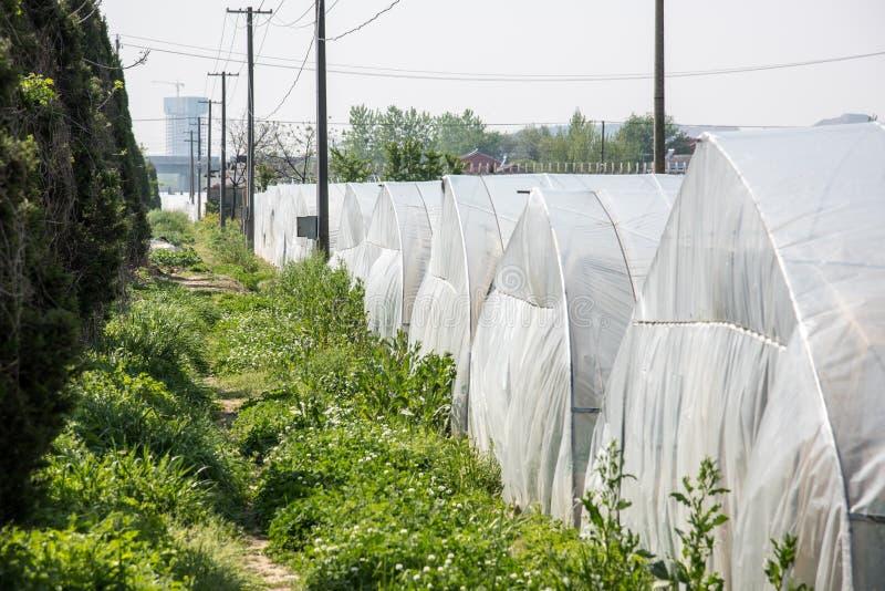 Serres chaudes végétales photographie stock libre de droits