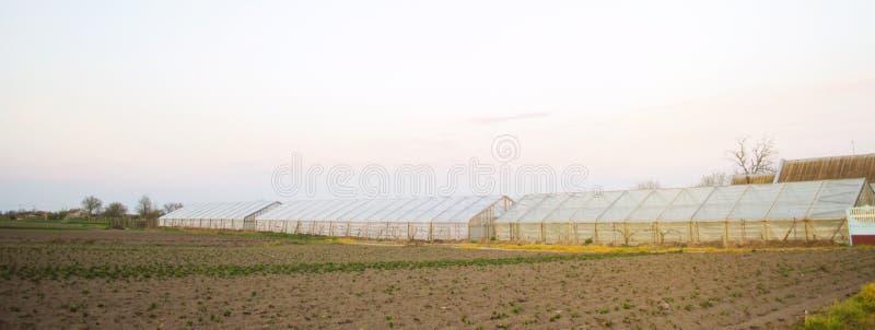 Serres op het gebied voor zaailingen van gewassen Groeiende organische groenten Het lenen aan landbouwers Landbouwgrondenlandbouw stock afbeelding
