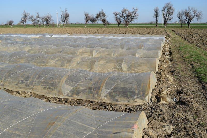 Serres van polymeerfilm die worden gemaakt De vroege lente in de tuinserres stock foto's