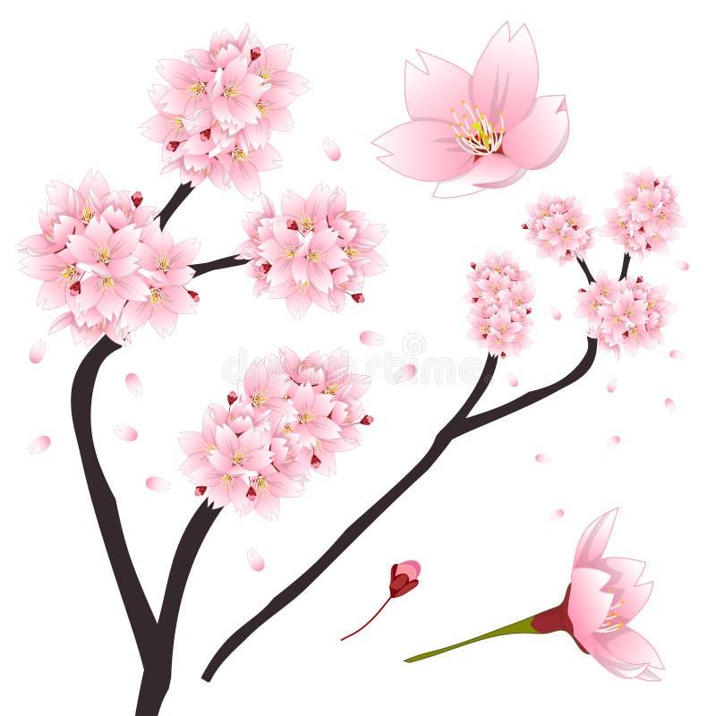 Serrulata del Prunus - flor de cerezo rosada, Sakura Flor nacional de Japón Ilustración del vector stock de ilustración