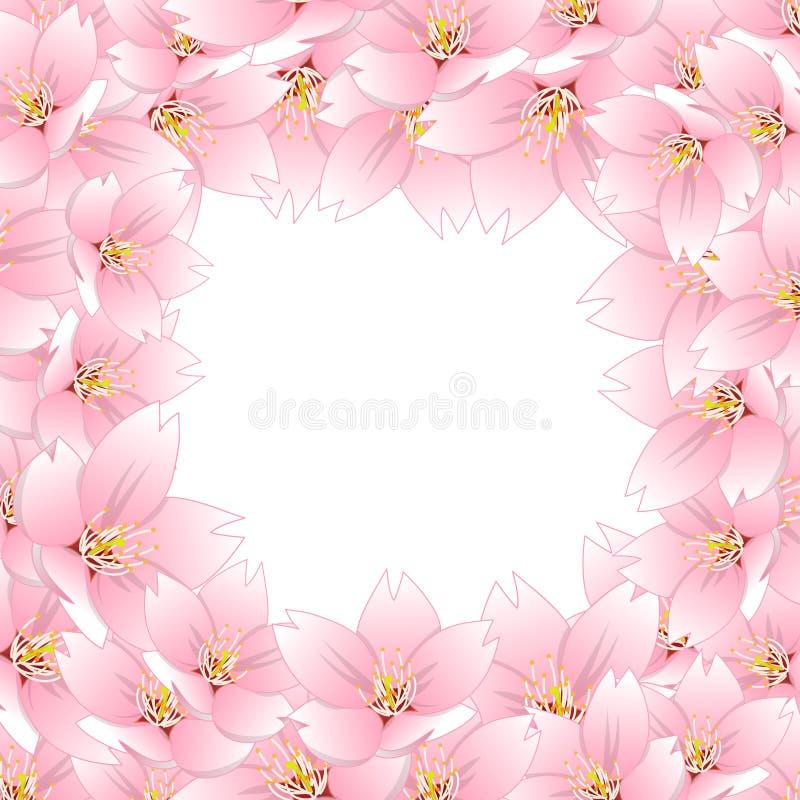 Serrulata del Prunus - la flor de cerezo, Sakura Border aisló en el fondo blanco Ilustración del vector stock de ilustración