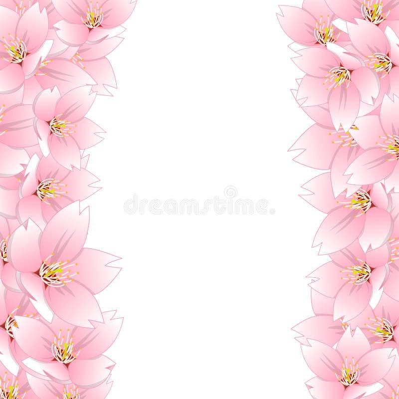 Serrulata del Prunus - la flor de cerezo, Sakura Border aisló en el fondo blanco Ilustración del vector ilustración del vector