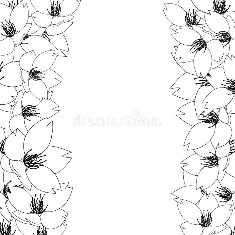 Serrulata del Prunus - la flor de cerezo, Sakura Outline Border aisló en el fondo blanco Ilustración del vector libre illustration