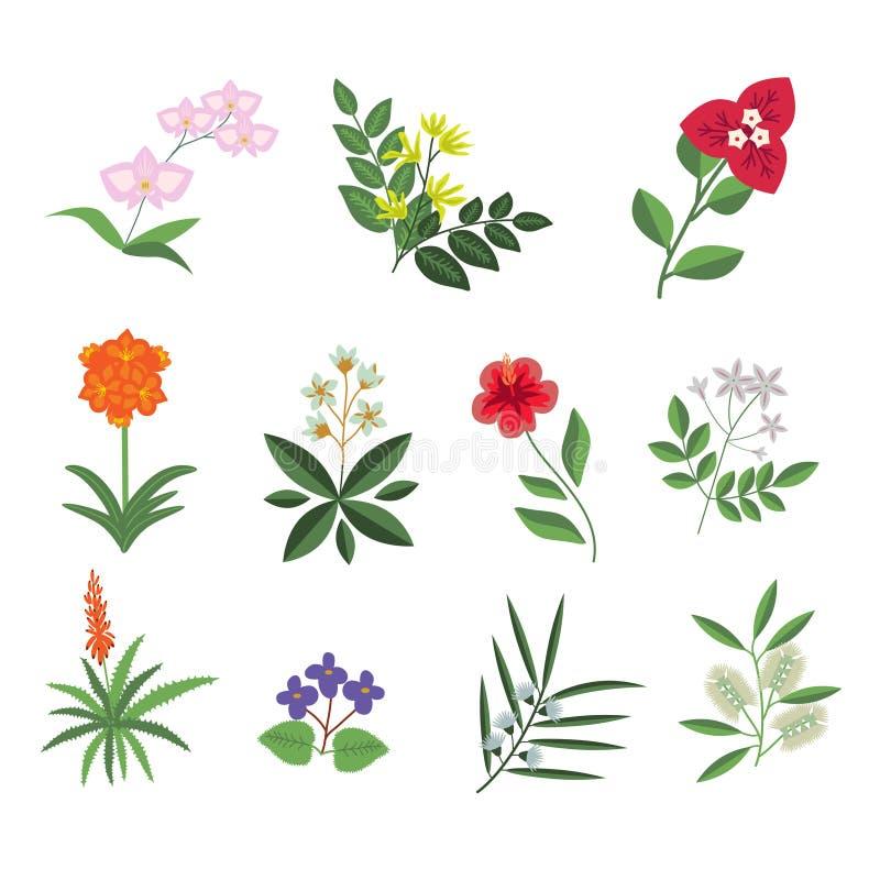 Sert tropicale dei fiori illustrazione di stock