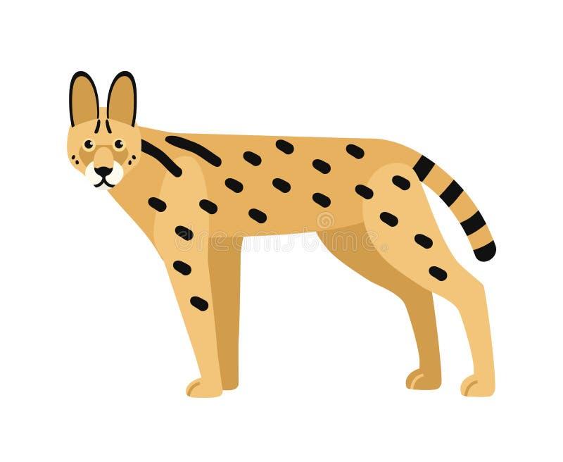 Serval aislado en el fondo blanco Gato africano salvaje con el cuerpo delgado y la capa manchada Depredador exótico hermoso libre illustration