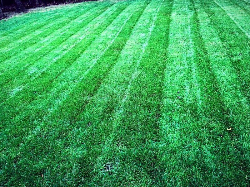 Serviço verde do cuidado do gramado da grama da grama fotografia de stock royalty free