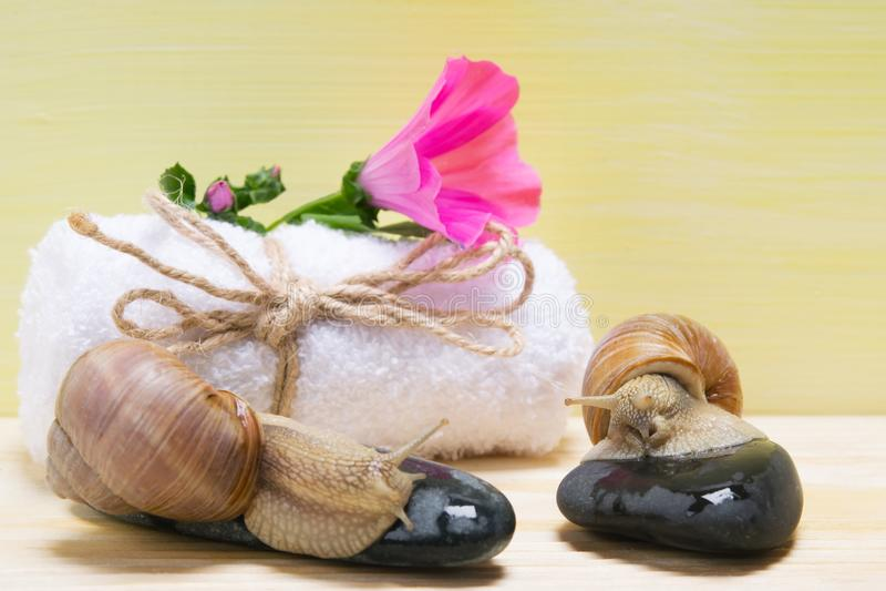 Serviette blanche et fleur rose là-dessus, à côté de grands escargots, nature de fond photos stock