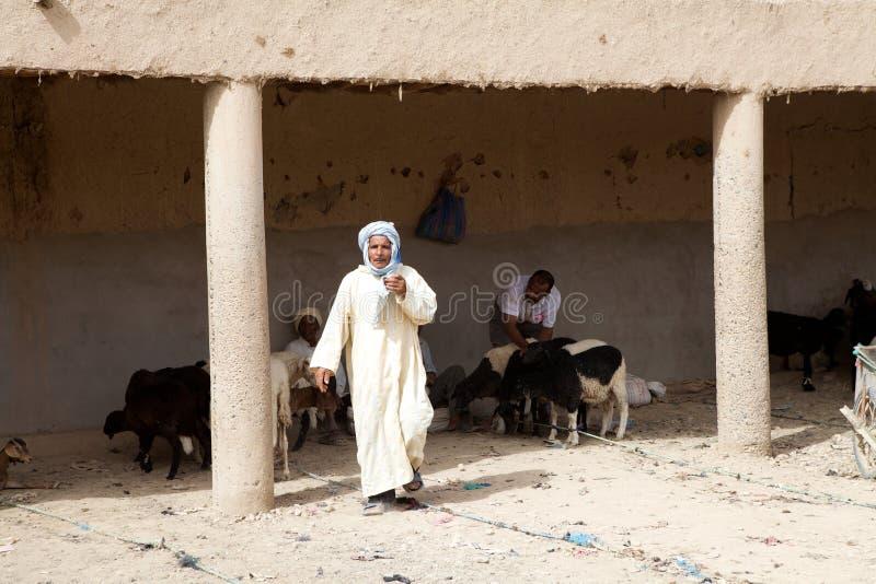Servizio delle capre di Berber immagine stock