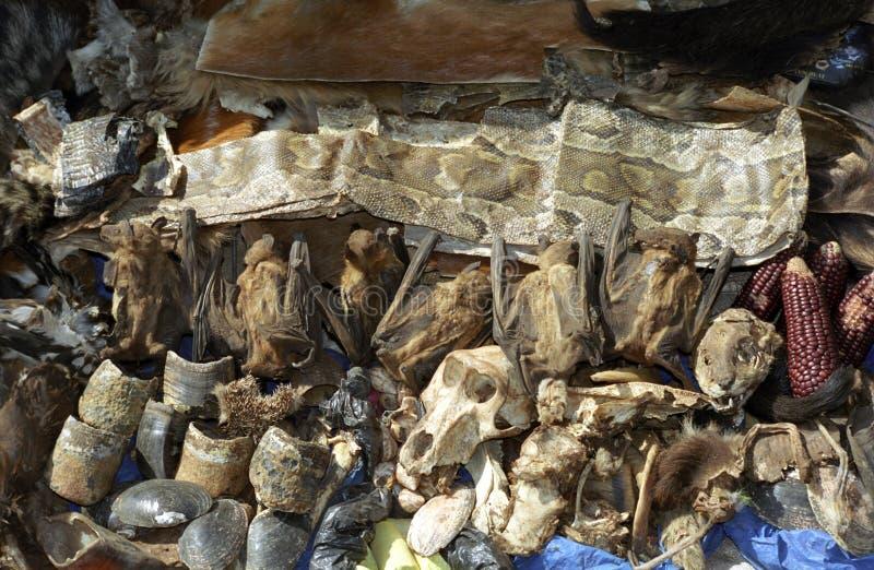Servizio dello Shaman, Bamako, Mali immagini stock libere da diritti