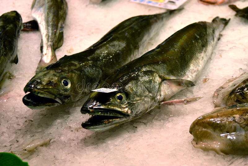 Servizio di pesci freschi fotografia stock libera da diritti