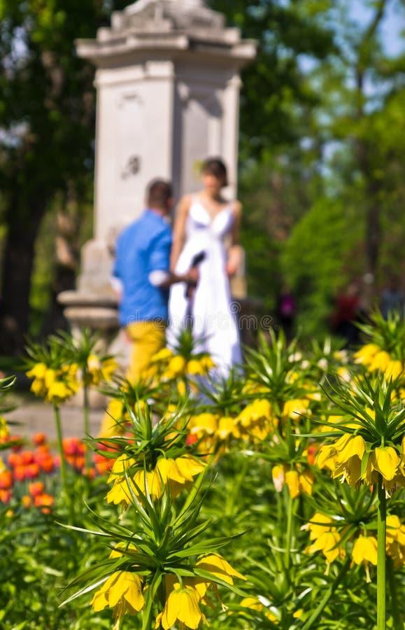 Sessão de foto do casamento em Stadtpark, baixa de Viena imagens de stock