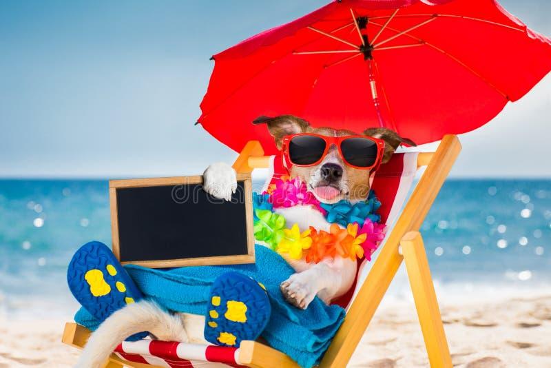 Sesta do cão na cadeira de praia imagens de stock