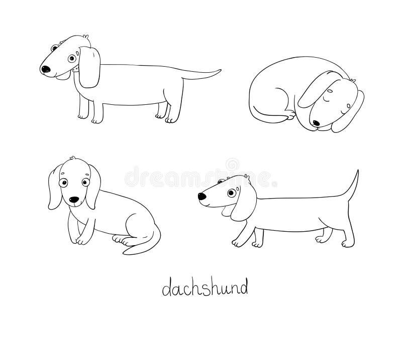 Set śliczna jamnik ilustracja w różnych pozach ilustracji