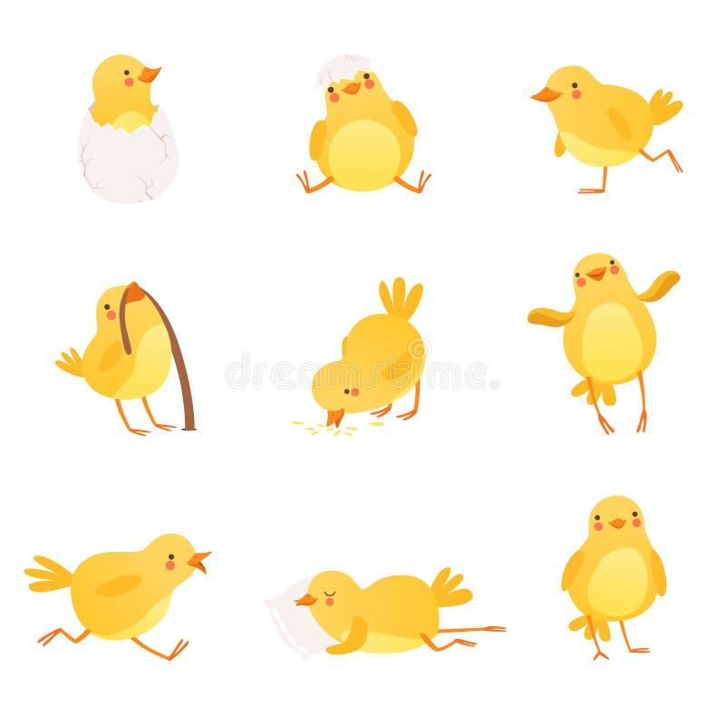 Set śmieszny żółty kurczak w różnorodnych sytuacjach Postać z kreskówki mały rolny ptak Odosobniony płaski wektorowy projekt ilustracji